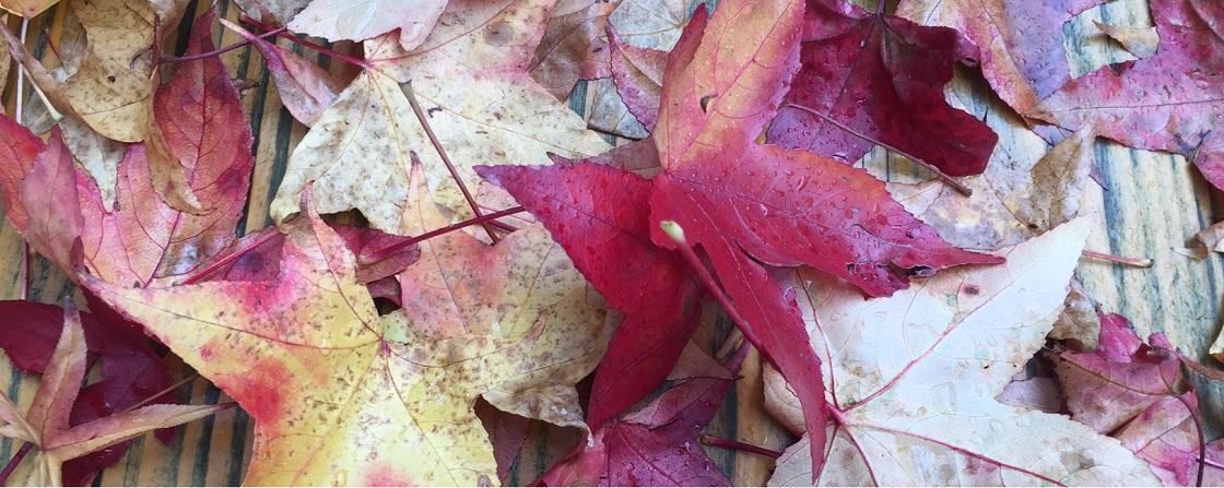 Herbstlaub Slider
