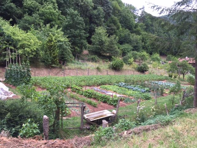 Monikas Garten